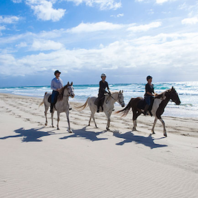 https://pakiriholidaypark.co.nz/wp-content/uploads/2018/08/horse-riding-sml.png